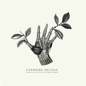 Carmona Retusa Cover WEB